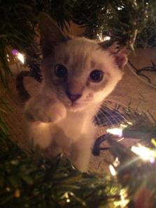 Trooper trying to climb the Christmas tree.