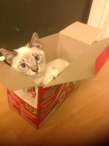 Trooper in a box.