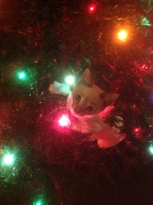 Trooper in the Christmas Tree.