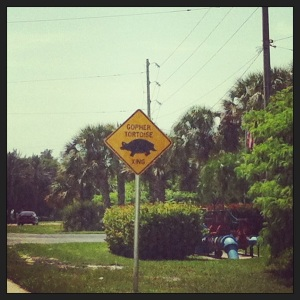 this is the sign of the gopher tortoise