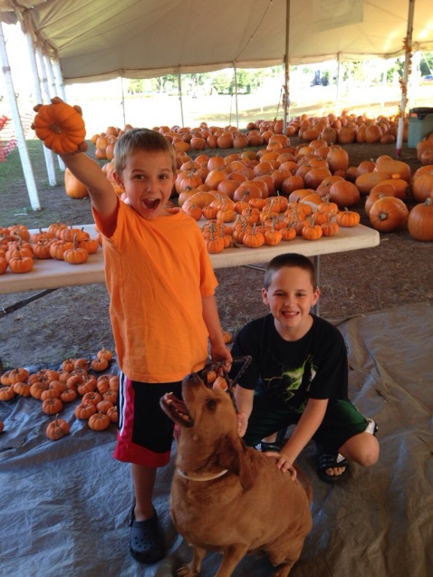 Picking out a pumpkin.